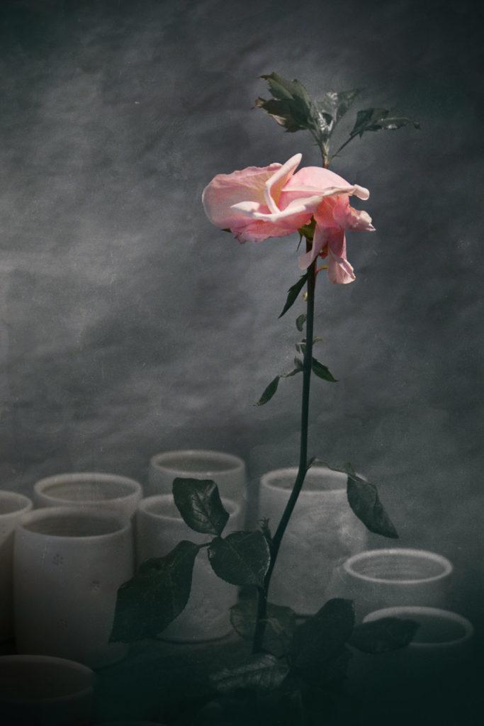 Abschied einer Winderrose - Wabi-Sabi