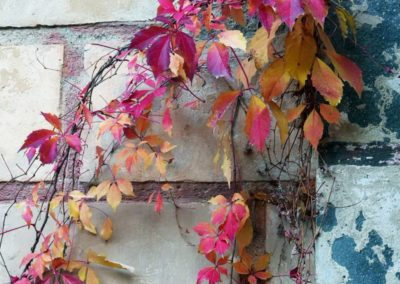 Bunter Herbstlaub - Wabi-Sabi